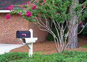 image of crepe myrtle  - mailbox and pole in beautiful retirement community - JPG