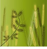 green grasses vector