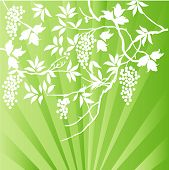 branches and berries over highlight vector