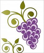 grapes (yummy) vector