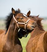 two foal in field