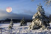 christmas tree against moon and snow, atmospheric scene, snowscape