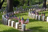 Memorials in Cemetery with American Flags poster