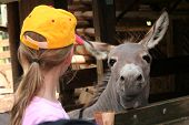 stock photo of yellow milk cap  - Girl wearing yellow cap and donkey in the zoo - JPG