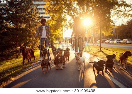 poster of Dog walker at work. Couple dog walker walking with dogs in the park