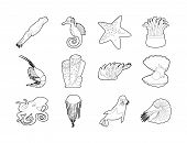 Sea Creature Icon Set. Outline Set Of Sea Creature Icons For Web Design Isolated On White Background poster