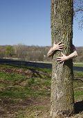 Genuine Tree Hugger