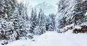 Wonderful Wintry Landscape. Winter Mountain Forest.majestic Mountain On Background. Picturesque Natu poster