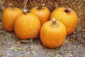 Five Pumpkins