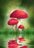 Fly Agaric Mushroom. illustration.