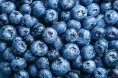 Washed blueberries background. Full Frame Shot Of Freshly Washed Blueberries.  poster