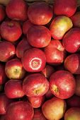 Apples Red Ripe Fruits Background Texture. Apple Harvest Concept. Ripe Organic Fruits Backdrop. Heal poster