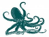 stock photo of octopus  - Wild ocean octopus with tentacles for sealife design - JPG