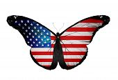 amerikanische Flagge Schmetterling fliegen, isolated on white background