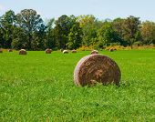 Rolls of hay in upstate New York