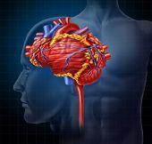 Coração-cérebro