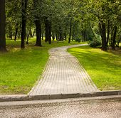 Causeway In Shady Park