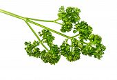 The Parsley Vegetable.
