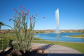 image of ocotillo  - Ocotillo and water fountain in a city park - JPG
