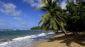 foto of west indies  - Beach of Tartane - JPG