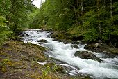 Hoh River Forest Creek