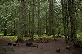 stock photo of primite  - Mossy Forest Campground  - JPG
