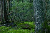 Deep Montana Forest