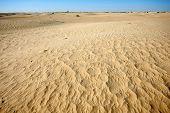 Dunes Of Sahara