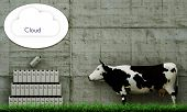 Milk Clouding