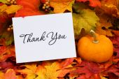 foto of thank you card  - A thank you card with a gourd sitting on a fall leaf background thank you - JPG