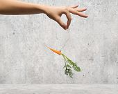 Close up of hand holding stick with carrot dangling on rope