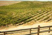 Beautiful Wine Vineyard