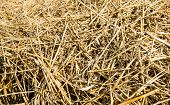 Straw From Close