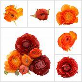 Orange Flowers Isolated On White Background