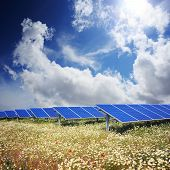 Solar Panels With Field Of Flowers