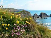 ?oastal Landscape Hartland Quay, Cornwall, South England