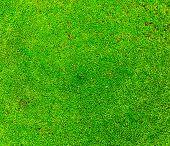 Fresh Lichen Field