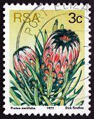 Postage Stamp South Africa 1977 Oleanderleaf Protea, Flowering P