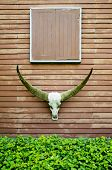 picture of cow skeleton  - Longhorn Buffalo skeleton decorated at house wall - JPG