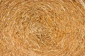 Golden Hay Background