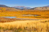 Autumn landscape in yellowstone national park