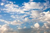 Blue Sky With White Clouds And Flying Bird