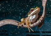 foto of lurch  - a red eyed tree frog on abstract  background - JPG