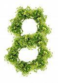 parsley eight digit