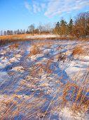 Allerton Park Prairie Illinois
