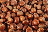 chestnut grains