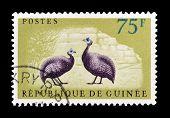 Guinea stamp 1961