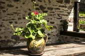 Ceramic flowerpot with geraniums