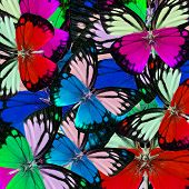 Mixed Of Colorful Butterflies In Best Background Patterns