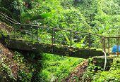 Old Lichen Bridge